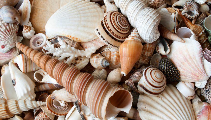 Andaman Islands Souvenirs Shells